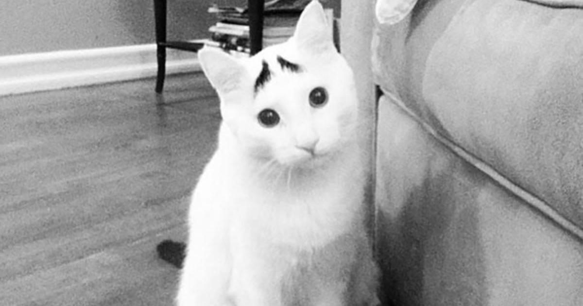 10 chats dont on se souviendra pour leur pelage exceptionnel !