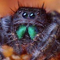 Astuces de grands-mères pour lutter contre les araignées dans votre maison