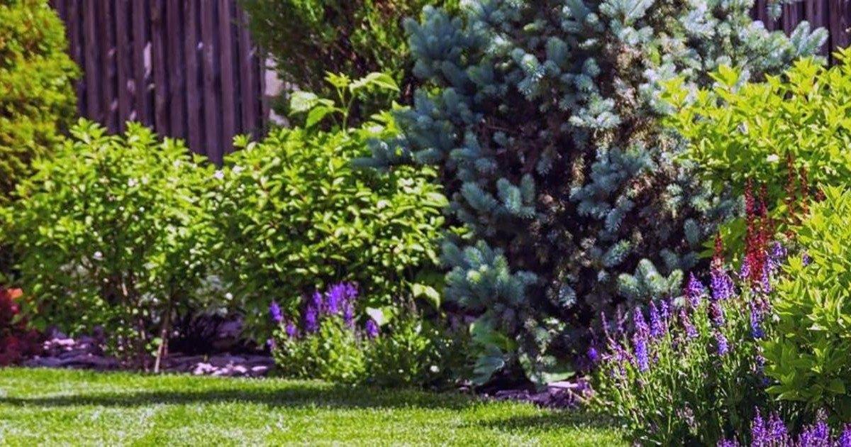 Comment faire pour bien choisir votre élagueur ce printemps