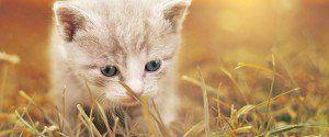 Apprendre le langage de son chat pour mieux pouvoir le...