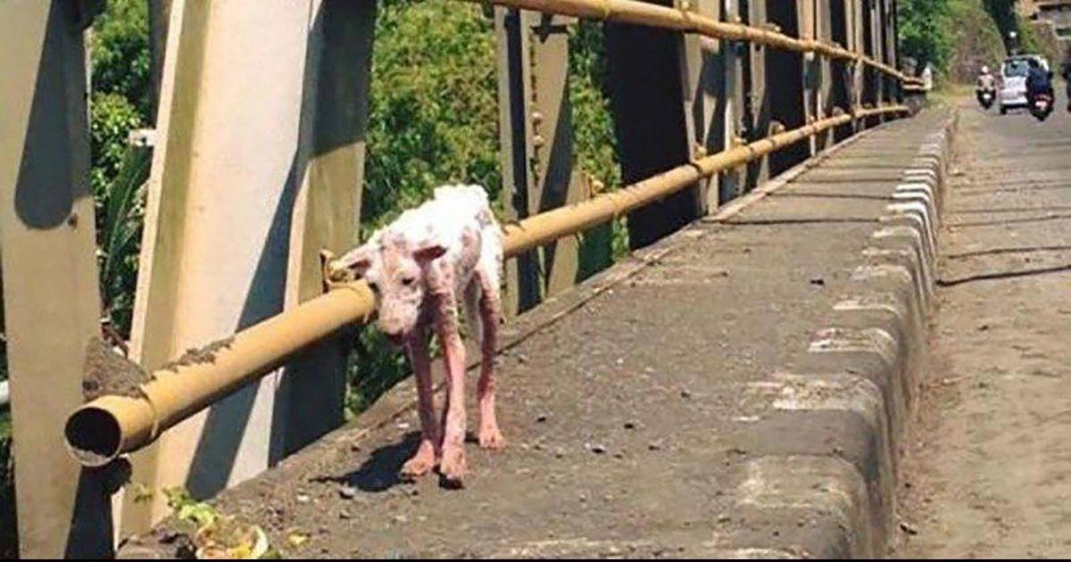 Un chien désespéré saute dans la voiture d'un inconnu et va changer sa vie à jamais!