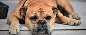 Un chien en détresse sauvé in extremis par la...