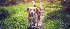 Comment alimenter son chien pour qu'il reste en bonne...