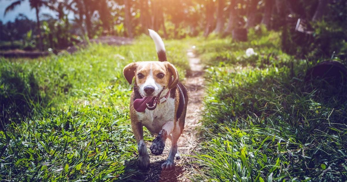 Comment alimenter son chien pour qu'il reste en bonne santé ?