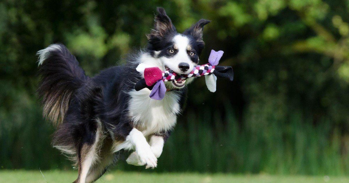 Découvrez comment faire pour éduquer son chien correctement ?