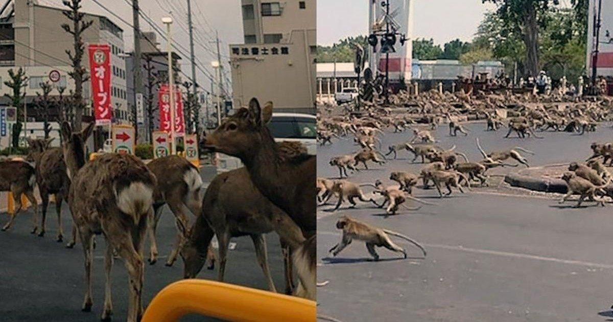 Les animaux font la loi dans des villes désertés suite au confinement