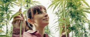 La consommation de cannabis en Europe aux yeux de la loi