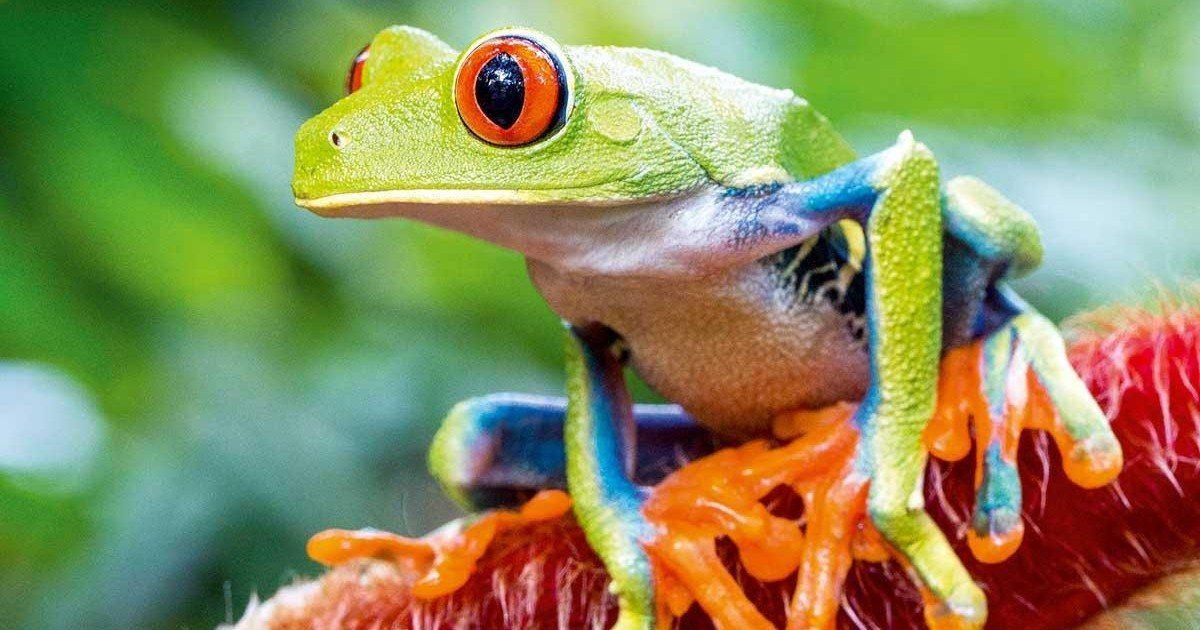 Le Costa Rica ferme ses zoos et rend la liberté aux animaux !