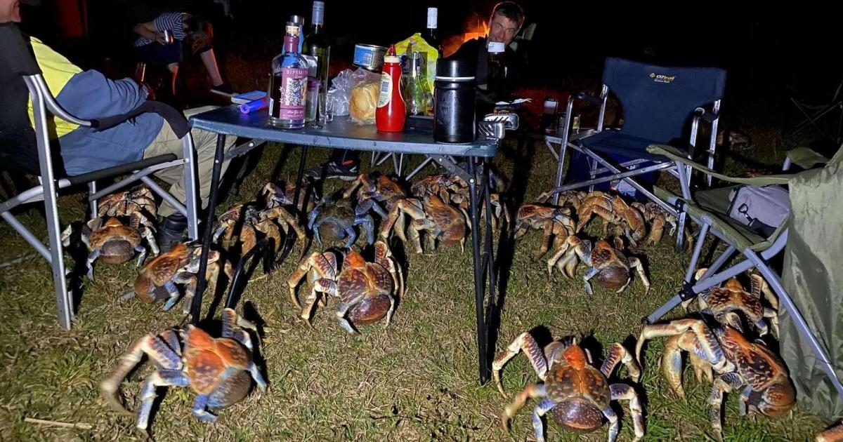 Attirés par le barbecue des crabes géants ont débarqués au camping