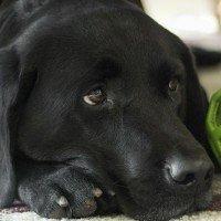 La dépression chez les chiens, un problème de plus en plus inquiétant