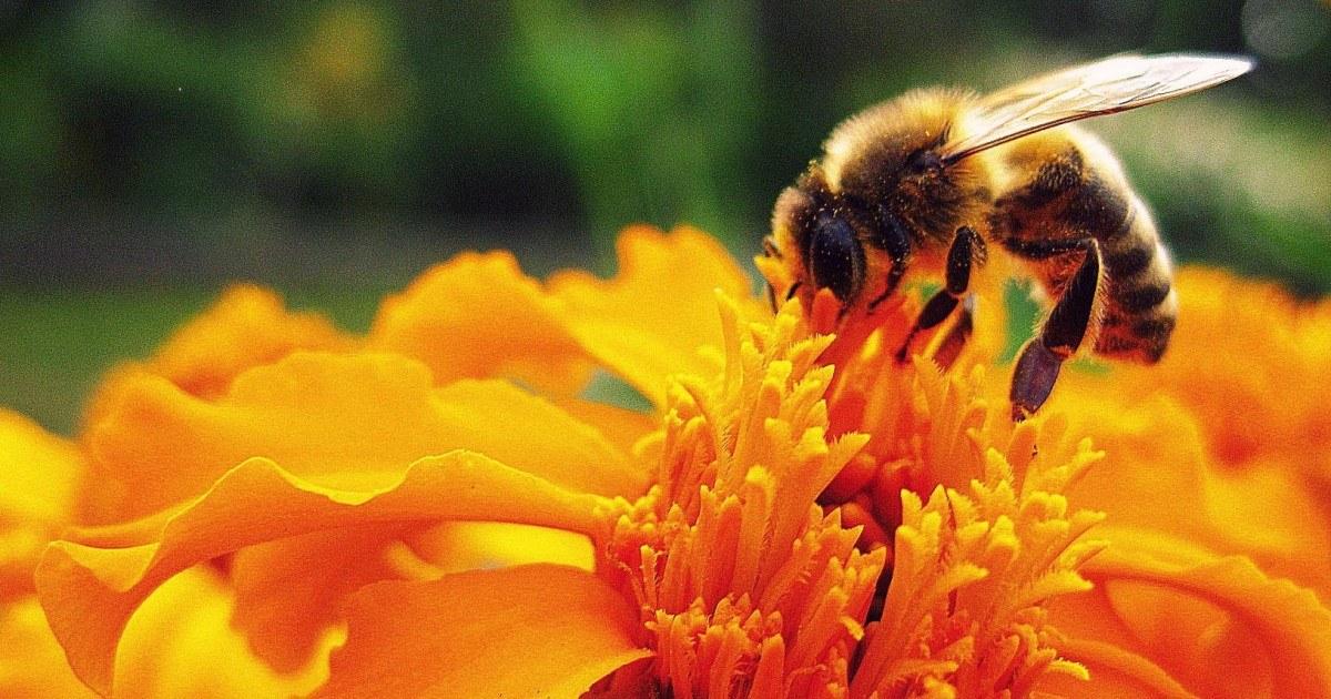 Comment faire la différence entre une abeille et une guêpe