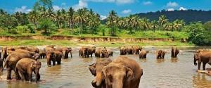 Les 4 endroits que vous devez visiter au Sri Lanka lors de vos...