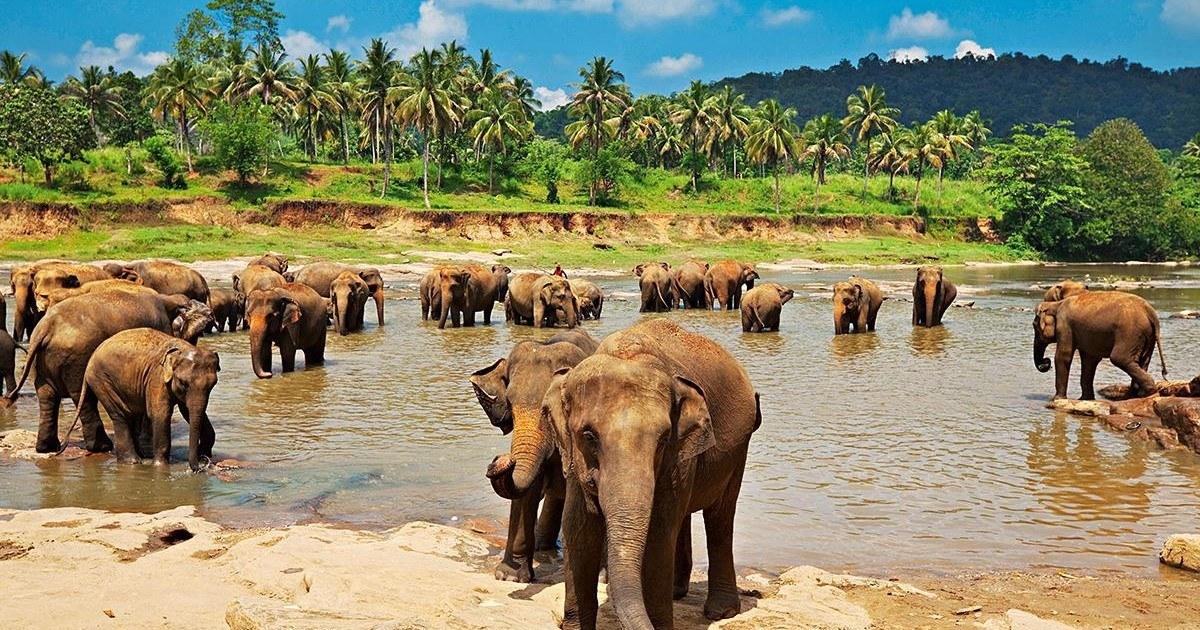Les 4 endroits que vous devez visiter au Sri Lanka lors de vos vacances