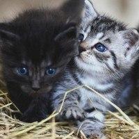 Une escape game vous permet de jouer avec des chats et de les adopter