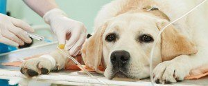Découvrez ce que fait votre animal avant de mourir par...