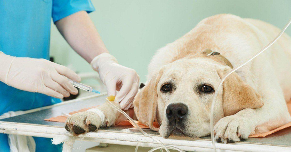 Découvrez ce que fait votre animal avant de mourir par euthanasie