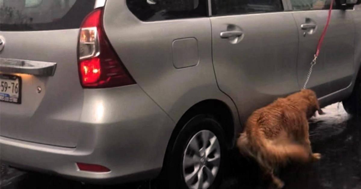 Une femme indigne traîne son chien depuis sa voiture pour le promener