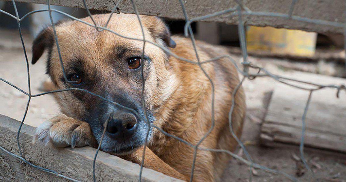 Le festival de la barbarie continue de massacrer des chiens et des chats