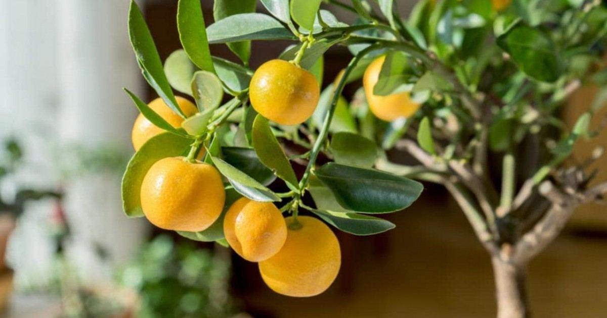 Quels sont les meilleurs fruits à faire pousser sur votre balcon