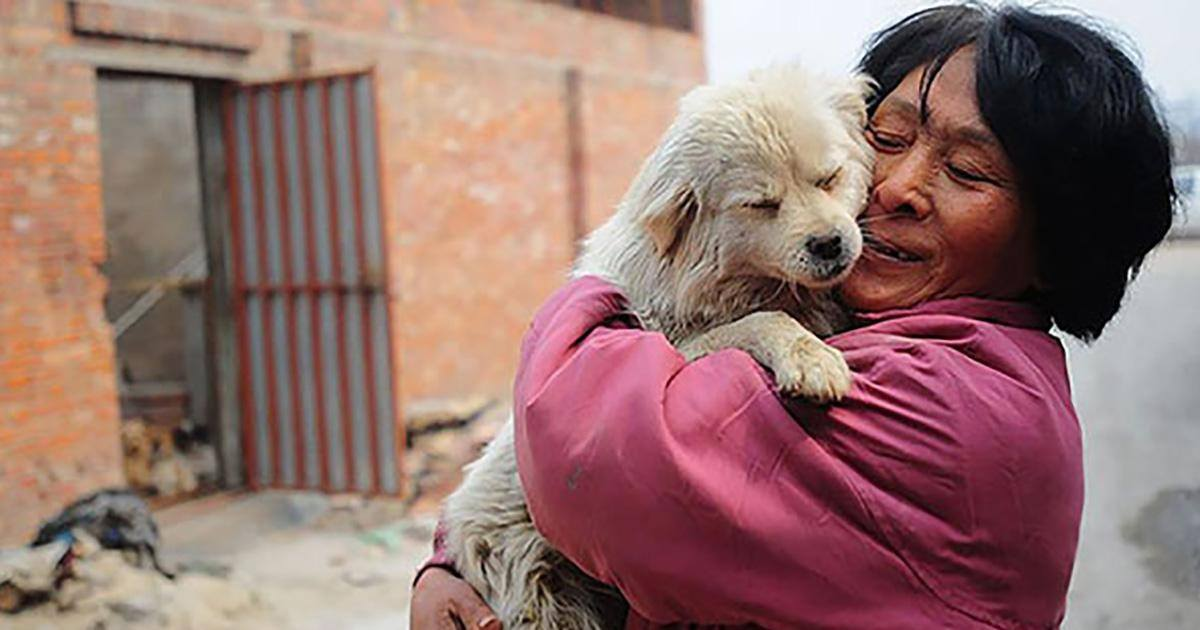 Grâce à la générosité d'une chinoise, 100 chiens ont échappé à la mort