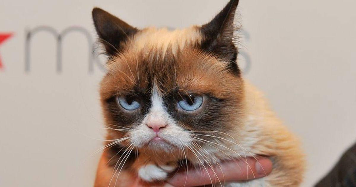 Grumpy Cat a désormais sa statue au Musée de Madame Tussauds !