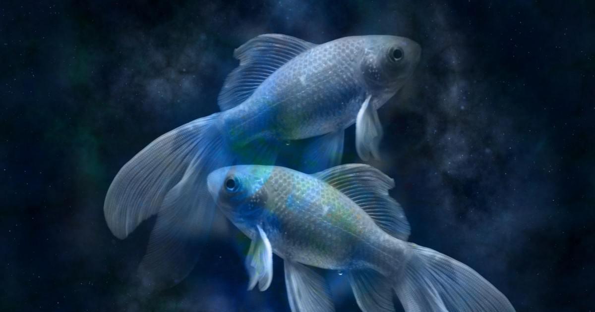 Découvrez notre horoscope 2020 poisson gratuit réalisé par notre astrologue