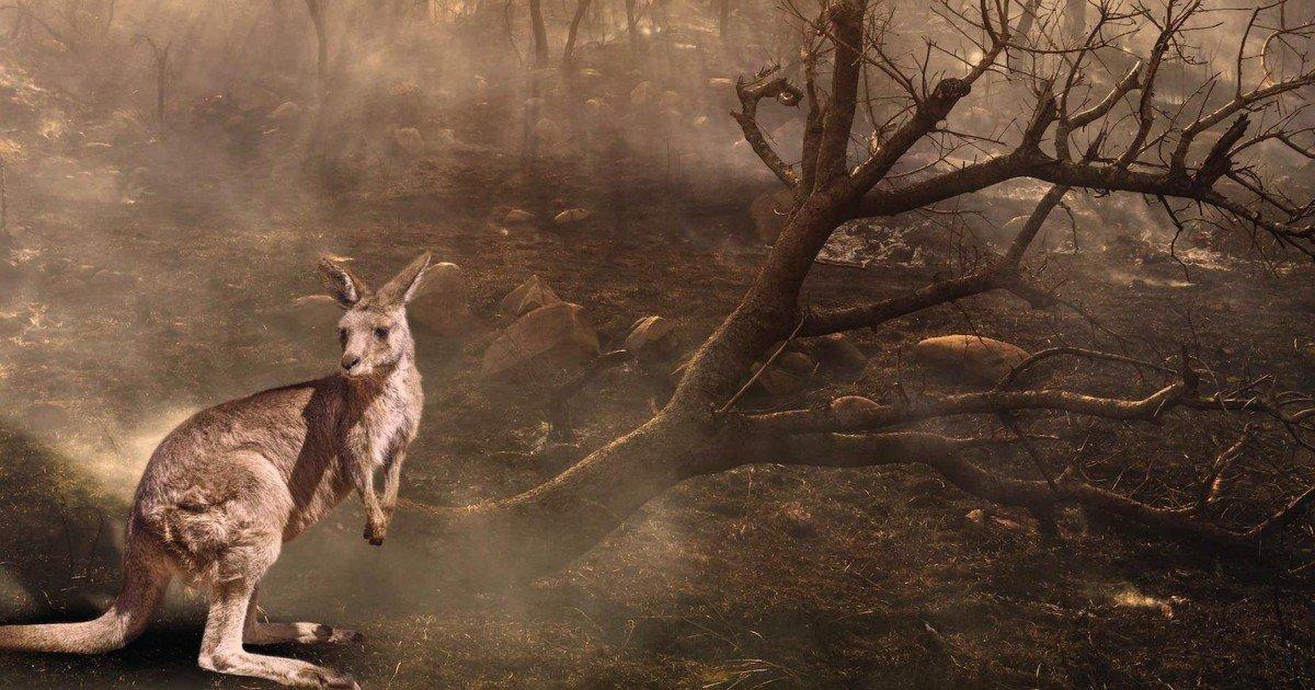 Incendies en Australie : 500 millions d'animaux morts depuis septembre