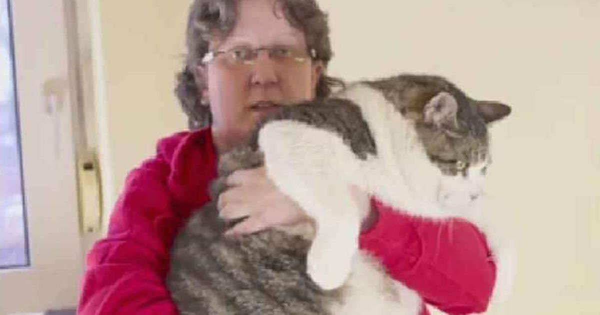 Incroyable : Ce chat est le plus gros du monde avec 17,5 kilos !