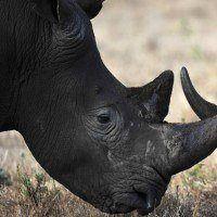 Inde: les gardiens d'un parc national ont le droit de tuer les braconniers