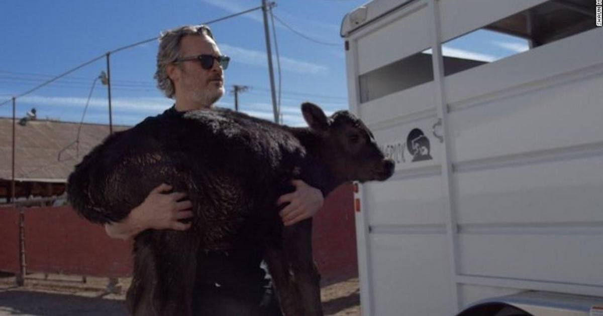 Il sauve une vache et son bébé d'une mort certaine dans un abattoir