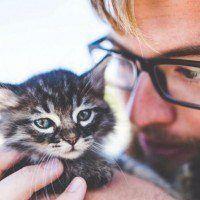 Job de rêve : Partez à Dublin et devenez caresseur de chat professionnel