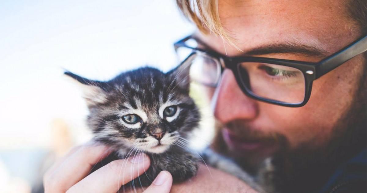 Caresseur de chat