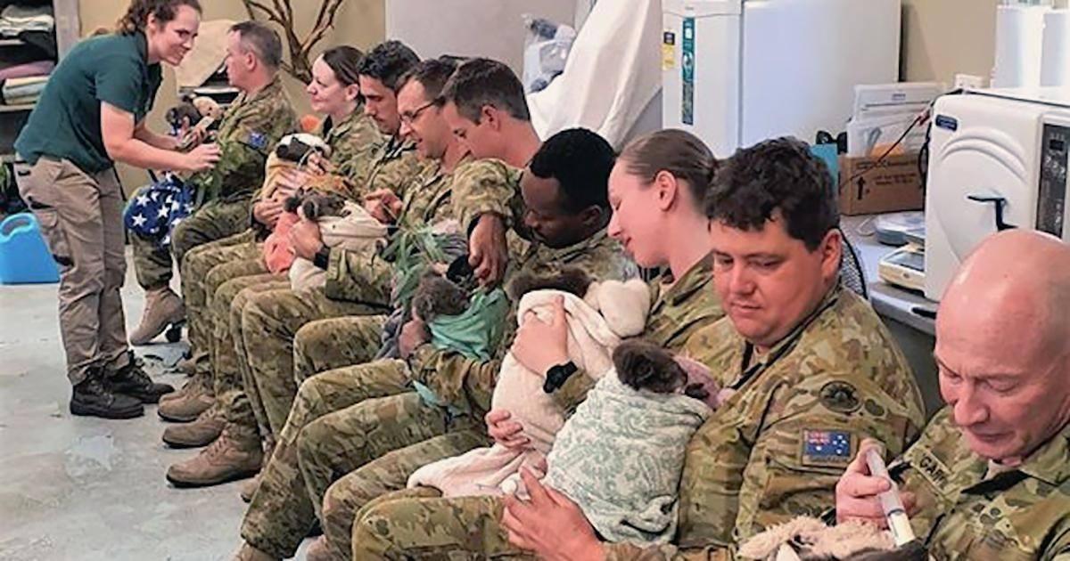 Des Koalas blessés sont nourris par des soldats réservistes durant leur pause