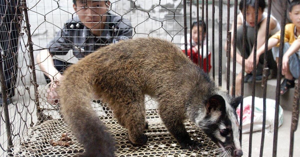 Les marchés d'animaux sauvages en Chine seraient ouverts