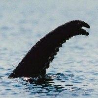 Découvrez enfin la véritable origine du monstre du Loch Ness