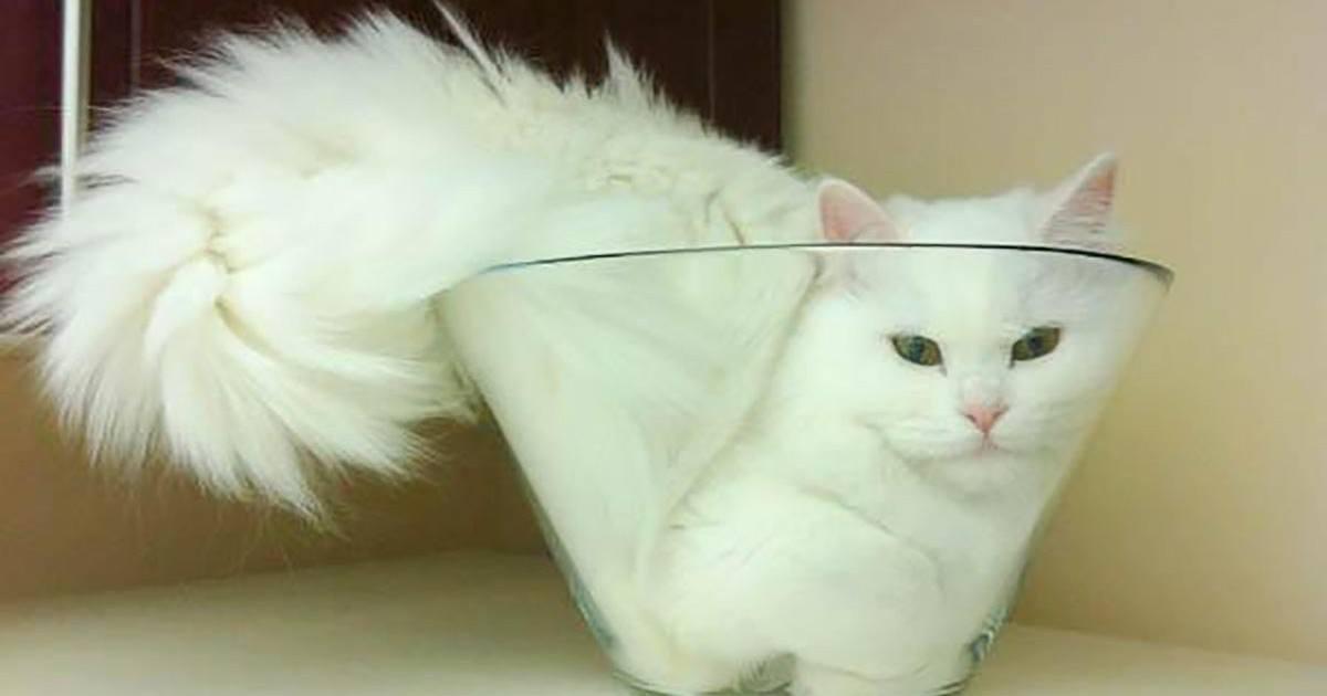 Où qu'il soit, le chat est le roi !