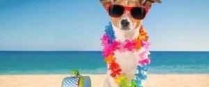Soyez payé 3000 euro pour partir en vacance avec votre chien