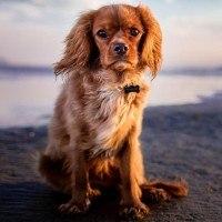 Pet-sitting, la nouvelle tendance de la garde d'animaux entre particuliers