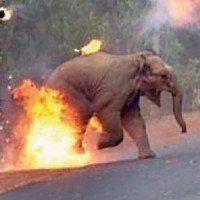 La photo d'un bébé éléphant enflammé par une foule fait scandale dans le monde entier