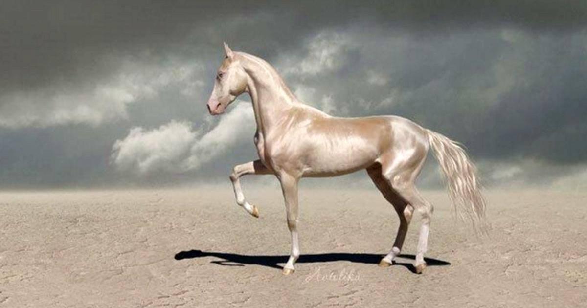Ce cheval qui a l'air d'avoir été plongé dans de l'or et le plus beau du monde
