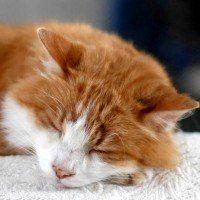 Découvrez pourquoi les chats dorment beaucoup la journée