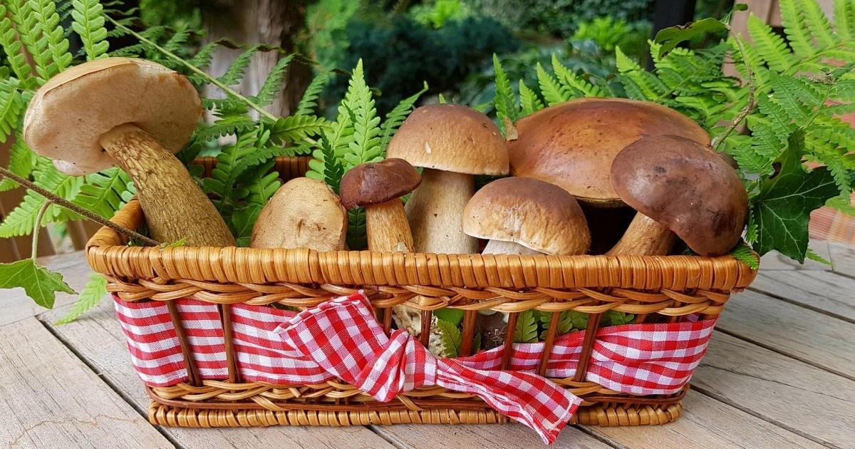 Les précautions à prendre pour une cueillette de champignons sans risque
