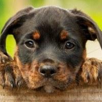 5 races de chiens qui sont parfaites pour vivre en appartement