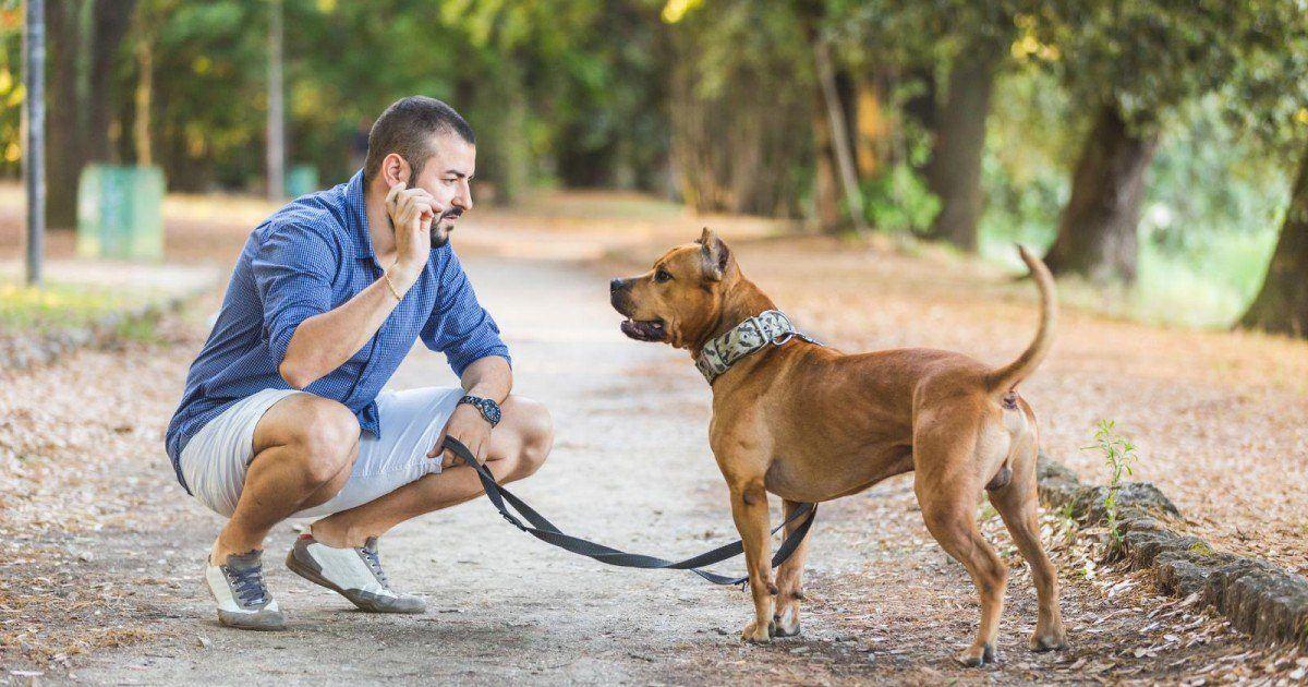 La vraie raison pour laquelle vous aimez bien aller promener votre chien