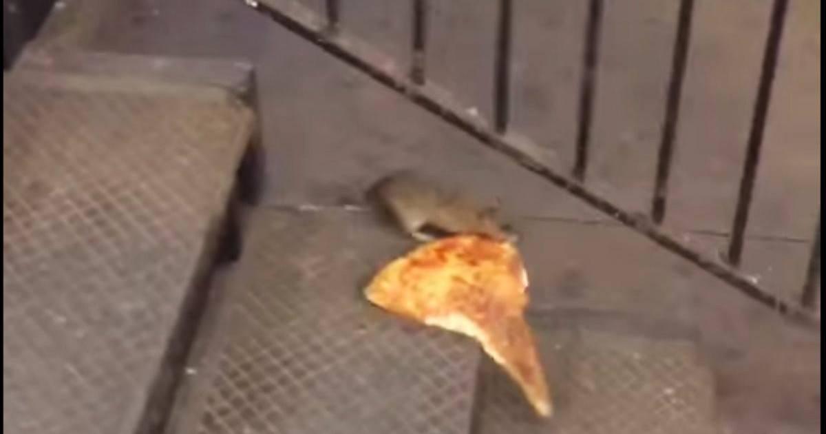 Un rat transportant une part de pizza fait le buzz sur la toile
