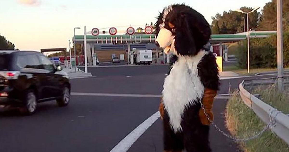 Rémi Gaillard en chien, la vidéo qui fait polémique