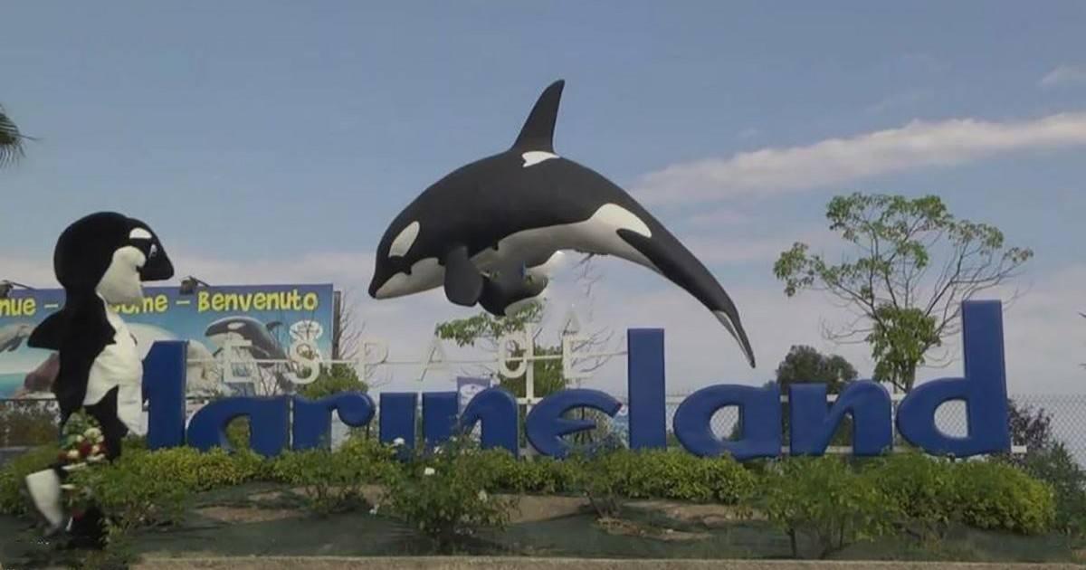 Rémi Gaillard déguisé en orque dans une vidéo engagée
