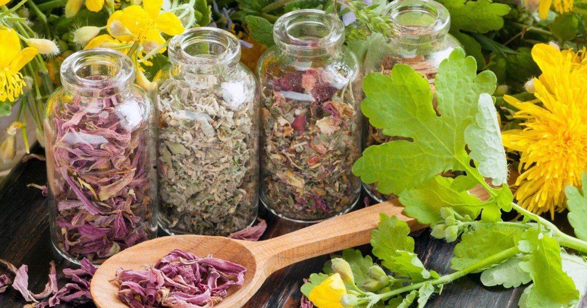 Plantes médicinales : Herbes aromatiques bonnes pour la santé à cultiver chez soi