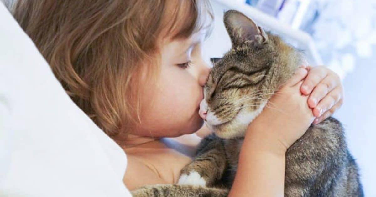 Découvrez comment faire pour savoir si votre chat vous aime ?