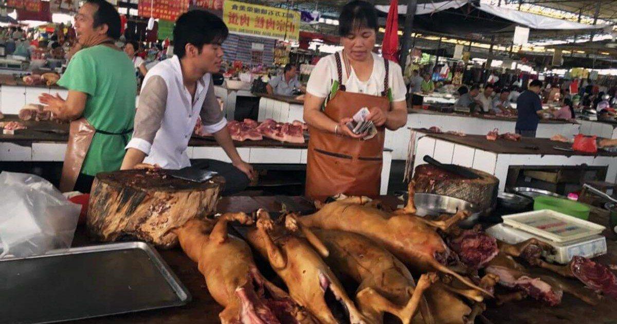 Shenzhen la consommation de viande de chat et de chien interdite